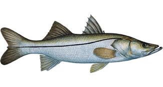Resoluções definem critérios para compostagem e para pesca do robalo
