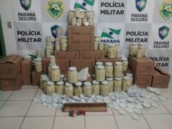 Policiais ambientais fecham fábricas clandestinas de palmito,